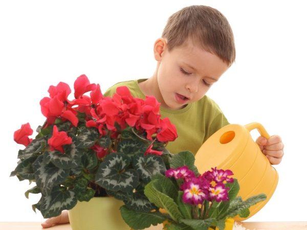 Любовь к растениям прививается с детства