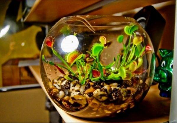 Растение в аквариуме
