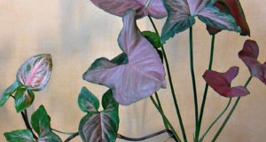 Изящное растение прекрасно вписывается в любой интерьер.