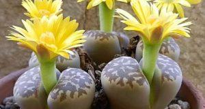 Яркие цветы в виде ромашки могут иметь оранжевую, белую или желтую окраску.