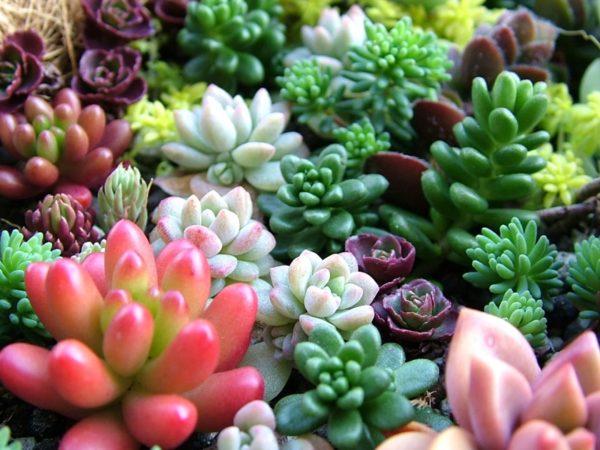 Очаровательный садик из стойких к жаре растений.