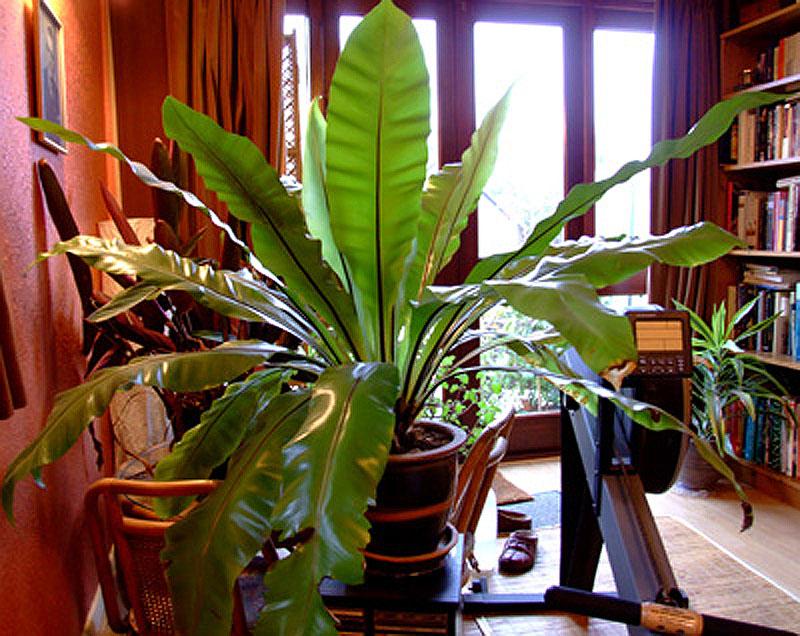 Тенелюбивые комнатные растения богатый выбор цветоводов