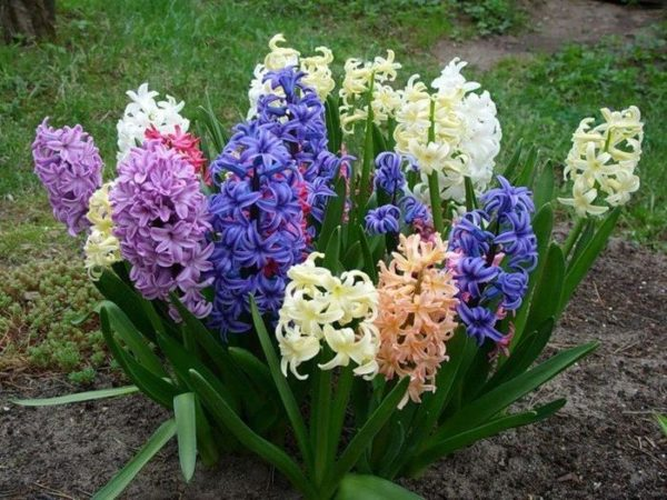 Очарование весенних цветов в саду.