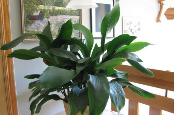 Растение в интерьере.
