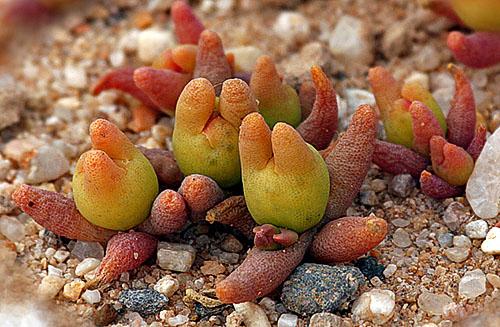 Эти растения необычны и очаровательны.