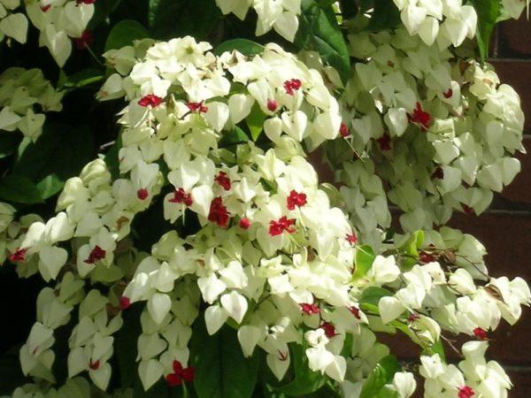 Белые прицветники с красными настоящими цветами выглядят ярко и нарядно.