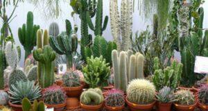 На пятой части суши можно встретить эти растения в природе.