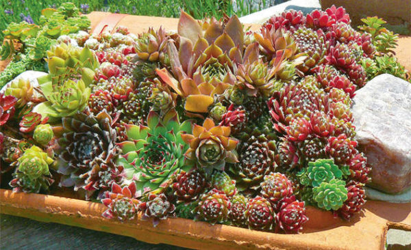 Подобрать растения для посадки легко, всегда можно отыскать декоративные экземплярыразной формы и окраски.