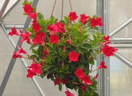 Цветы красного оттенка.