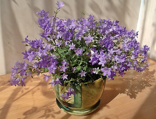 Цветущее растение на столе.