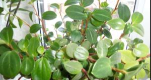 Растение на освещенном подоконнике.