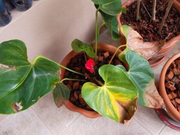 Заболевшие растения необходимо своевременно лечить.