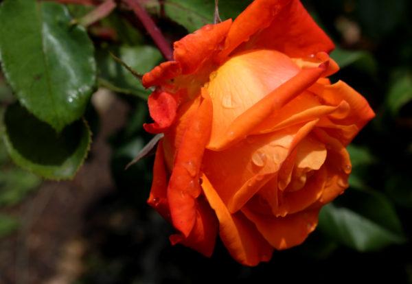 Цветок оранжевого цвета